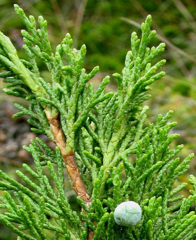pflanzenbilder gerhard nitter